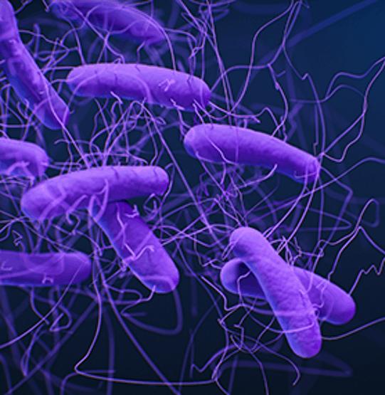 Clostridioides.difficile(Clostridium.difficile)