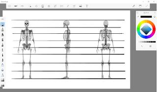 人体比率、骨格、イラスト